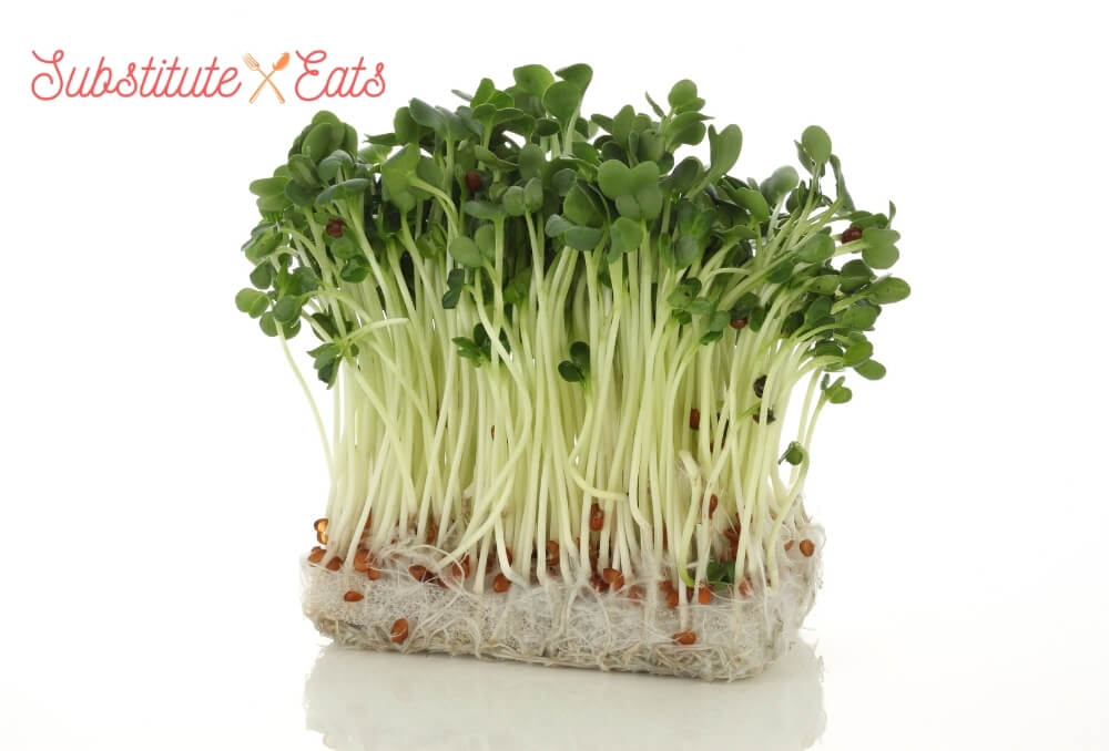 Watercress Substitutes - Radish Sprouts